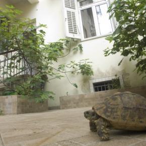 ホステル - Split Guesthouse and Hostel