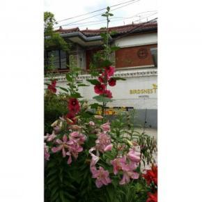 ホステル - Birdsnest Hostel Hongdae